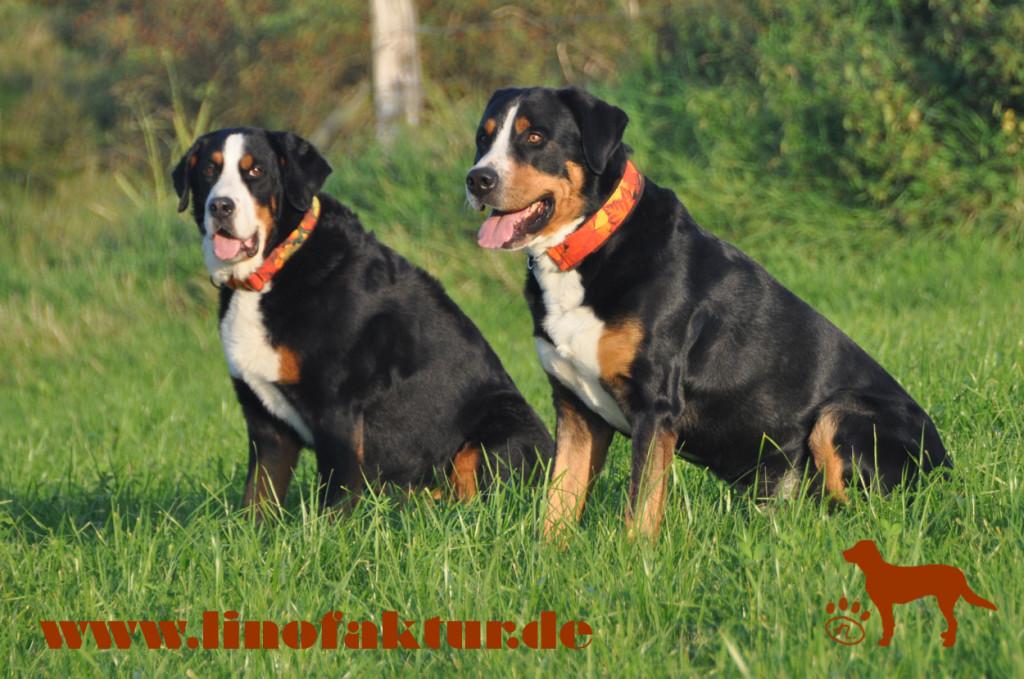 Sintra und Rasco mit den Herbsthalsbändern